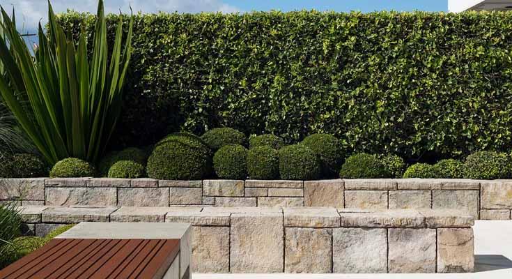 Consejos Para Mantener tu Jardín Limpio y Ordenado