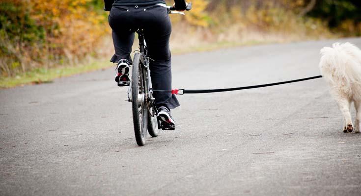 Ciclismo con tu Perro