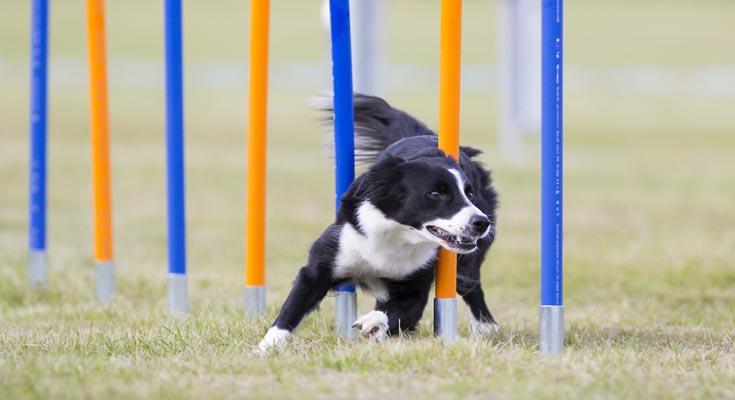 Deportes con tu Perro