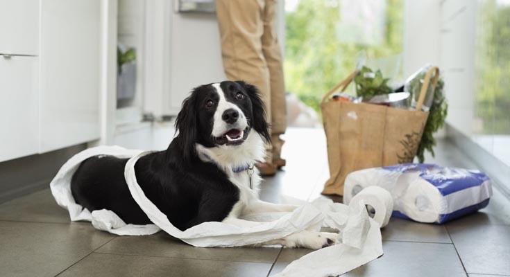 Manejo del Comportamiento del Perro