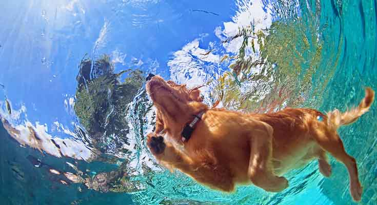 Nadar con tu Perro